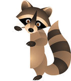 Raccoon with blank sign Stock Photography