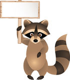 Raccoon with blank sign Stock Images