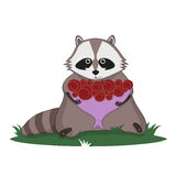 Raccoon and bouquet of roses Stock Photography