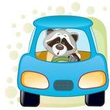 Raccoon in a car Royalty Free Stock Photos