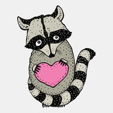 Raccoon carrying a heart. Stock Photography