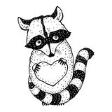 Raccoon carrying a heart. Royalty Free Stock Images