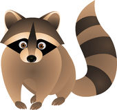 Raccoon cartoon Stock Images