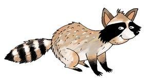 Raccoon cartoon Royalty Free Stock Photos