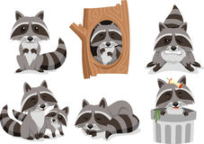 Raccoon cartoon Set Royalty Free Stock Image