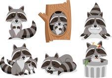 Raccoon cartoon Set Royalty Free Stock Image