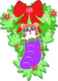 Raccoon in a Christmas Stocking Stock Image