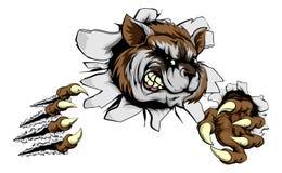 Raccoon claw breakthrough Stock Photography