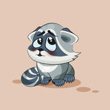 Raccoon cub confused Royalty Free Stock Photo