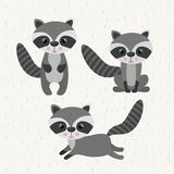 Raccoon cute wildlife icon. Vector isolated graphic royalty free illustration