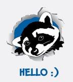 Raccoon divertente Immagini Stock Libere da Diritti