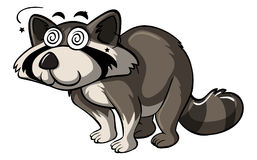 Raccoon with dizzy eyes Royalty Free Stock Photography