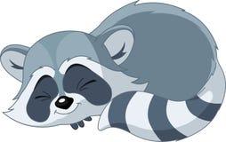 Raccoon engraçado dos desenhos animados do sono Imagens de Stock Royalty Free