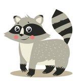 Raccoon felice Attacco del procione Occhi del procione Procione di vettore Fotografia Stock