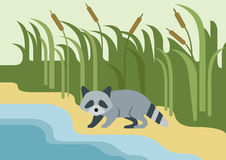 Raccoon flat design cartoon wild animal. On the bank of the river. Flat zoo children collection Vector Illustration