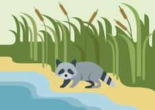 Raccoon flat design cartoon  wild animal Stock Photos