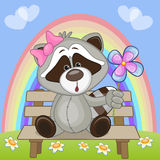Raccoon with flower Stock Images