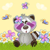 Raccoon with flowers Stock Photography