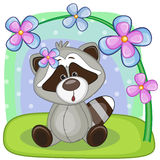 Raccoon with flowers Royalty Free Stock Photo
