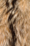 Raccoon Fur Background Royalty Free Stock Image