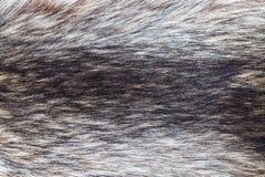 Raccoon fur close up Stock Photos