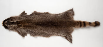 Raccoon fur. Skin silver raccoon on a white background Royalty Free Stock Photo