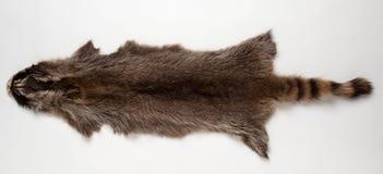 Raccoon fur Royalty Free Stock Photo