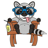 Raccoon in glasses  sitting on a bench Stock Photography