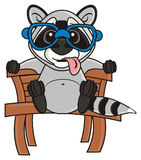 Raccoon in glasses  sitting on a bench Royalty Free Stock Image