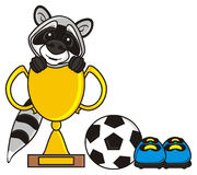 Raccoon  hanging out sitting in the football cup Stock Photos