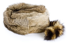 Raccoon Hat Stock Images