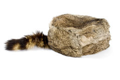 Raccoon Hat Royalty Free Stock Photo