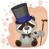 Raccoon in hat Stock Photo