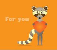 Raccoon with heart Stock Photo