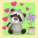 Raccoon with heart and flower Royalty Free Stock Photos