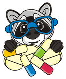 Raccoon holding pills Stock Images