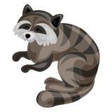 Raccoon icon, cartoon style royalty free illustration