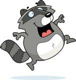 Raccoon Jumping Royalty Free Stock Photo