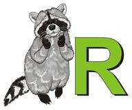 Raccoon and large letter. Funny raccoon stand with large green letter r vector illustration