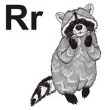 Raccoon with letters. Cute raccoon stand with large black letters r Royalty Free Stock Photo