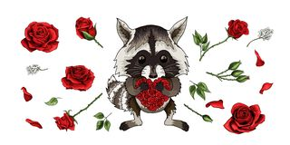 Raccoon lovely animal cartoon character with red roses set isolated on white royalty free illustration