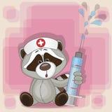 Raccoon nurse Stock Photography