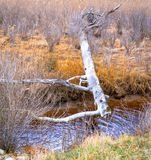 Raccoon path. Old fallen tree over the creek. Used as a path for raccoons and foxes Stock Images