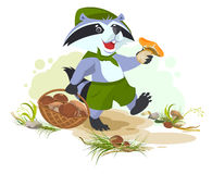 Raccoon scout collects mushrooms. Mushroomer picker with basket Stock Image
