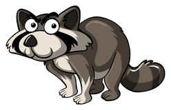 Raccoon with serious face. Illustration Stock Photos