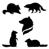 Raccoon set vector. Raccoon set of black silhouettes. Icons and illustrations of animals. Wild animals pattern royalty free illustration