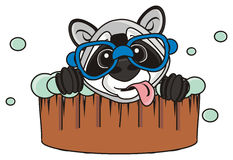 Raccoon sits in a basin Royalty Free Stock Photos