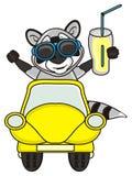 Raccoon sitting in the car Stock Photo