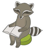 Raccoon sitting on stool ottoman and reading book Royalty Free Stock Photos