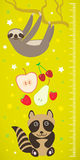 Raccoon sloth and apple pear strawberry cherry on green background Children height meter wall sticker. Vector Royalty Free Stock Image